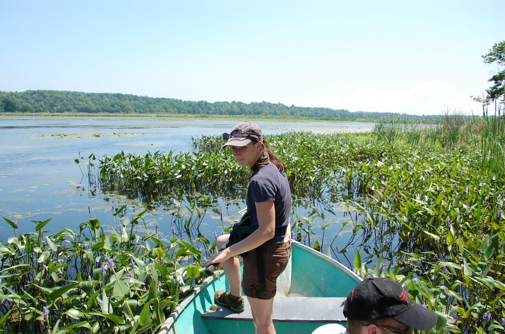 Fair Haven 2011 – Sophie Cardinal collecting Dufourea novaeangliae at Fair Haven Beach State Park