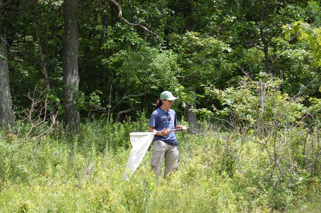 Huyck Preserve 2009 – Sophie Cardinal collecting Macropis nuda